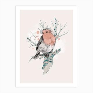 Robin On Birch Art Print