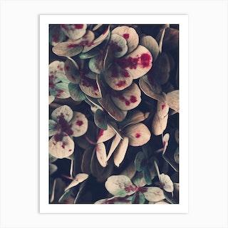 Hydrangea Flowers Art Print