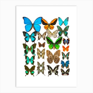 Collection Of Butterflies Art Print