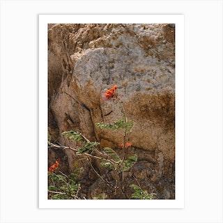 Mexico Mountain Flower Art Print