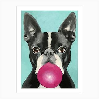 Boston Terrier With Bubblegum Art Print