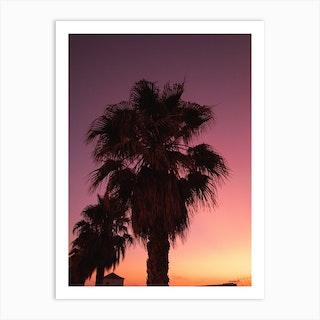 Palms At Dawn Art Print