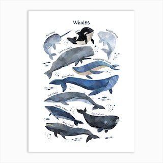 Watercolour Whales Art Print