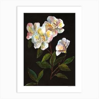 Botanique Art Print