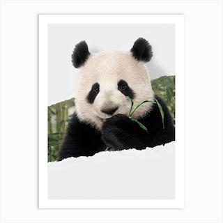 Panda Torn Paper Art Print