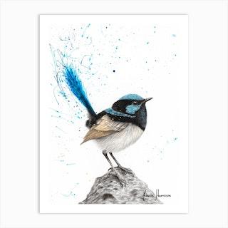 Mountain Blue Wren Art Print