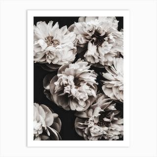 White Peonies 2 Art Print