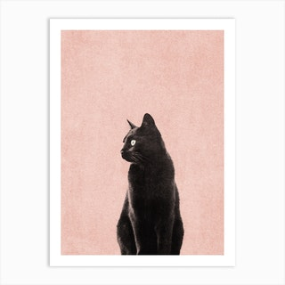 Black Cat Peach Art Print