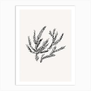 Summer Fern Art Print