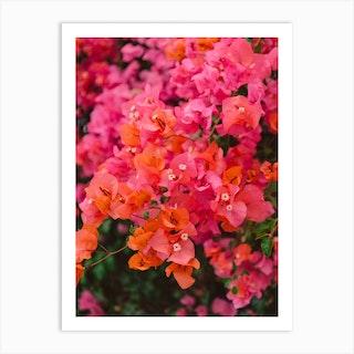 California Blooms Xii Art Print