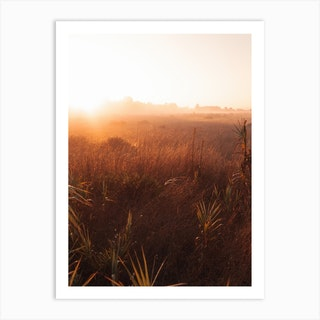 Grass In The Morning Ii Art Print