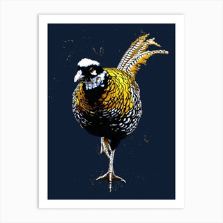The Reeves Pheasant On Midnight Blue Art Print