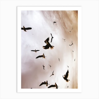 Flight And Freedom 02 Art Print