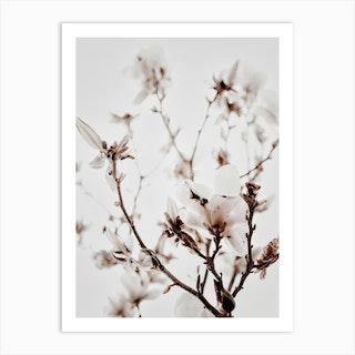 White Magnolia 1 Art Print
