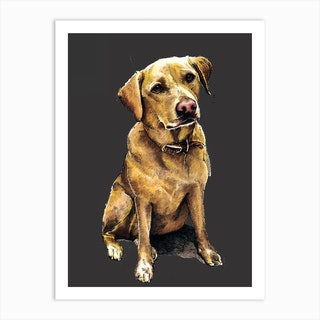 Daisy The Labrador Art Print