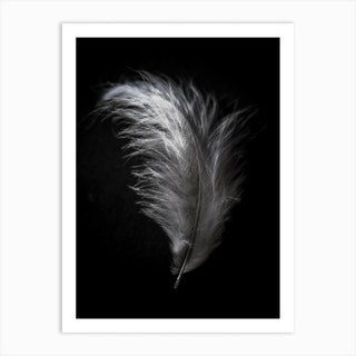 Black And White Feather 7 Art Print