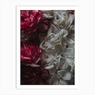 Carnation Bed Art Print