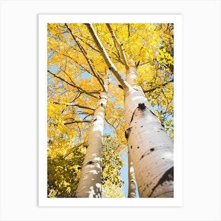 Aspen Tree Yellow Leaves Art Print