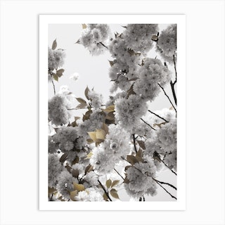 White Spring Blossoms Art Print