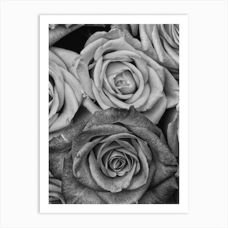 Vintage Style Roses Black And White Copy Art Print