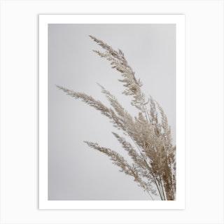 Soft Natural Pampas Grass Art Print