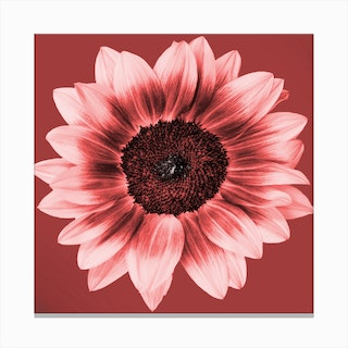 Ceramic Sunflower Square Canvas Print