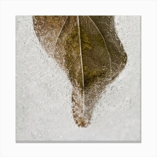 Leaf Detail Square Canvas Print