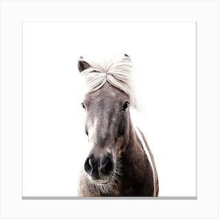 Iceland Horse Sorli Square Canvas Print