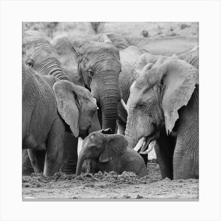 Elephants Come Together Canvas Print