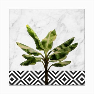 Banana Plant on White Marble and Checker Wall Canvas Print