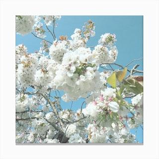 Blue, White Flowers Canvas Print