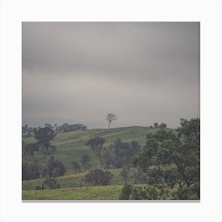 Tree On Top 2 Canvas Print