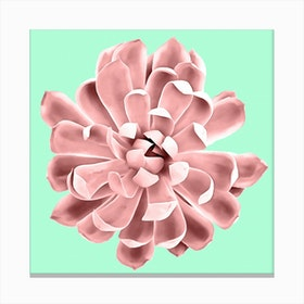 Pink Succulent Plant on Cyan Canvas Print