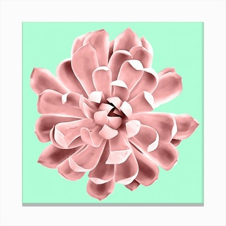 Pink Succulent Plant on Cyan Canvas Print