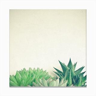 Succulent Forest Canvas Print