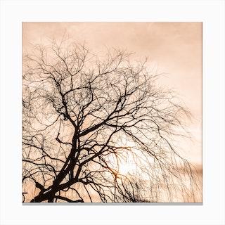 Sunset Tree Square Canvas Print