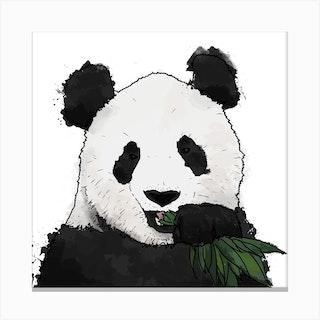 Panda And Bamboo White Square Canvas Print