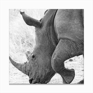 Rhino Square Canvas Print