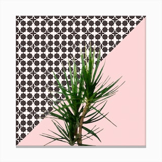 Dracaena Plant on Pink and Lattice Pattern Wall Canvas Print