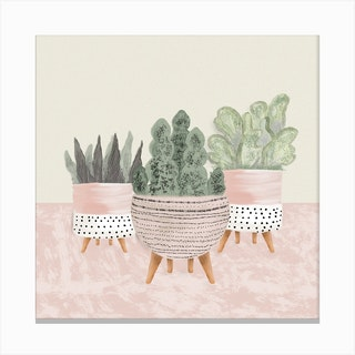 Cute Succulents In Pink Square Canvas Print