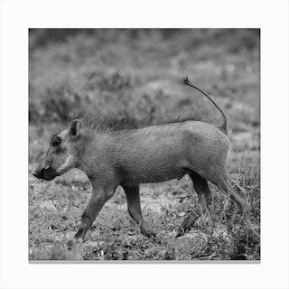 Warthog Baby Canvas Print