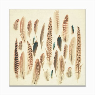 Found Feathers Print Canvas Print