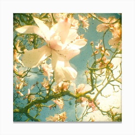 Vintage White Flowers Canvas Print