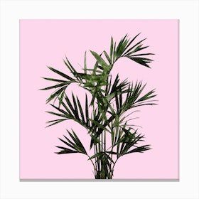 Palm Plant on Pastel Pink Wall Canvas Print