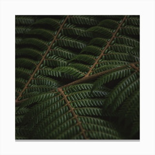 Fern 3 Canvas Print