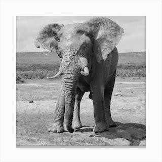 Big Elephant Canvas Print
