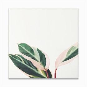 Pink Leaves Iii Canvas Print