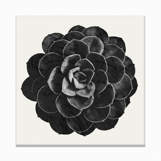 Succulent Black Marble Canvas Print