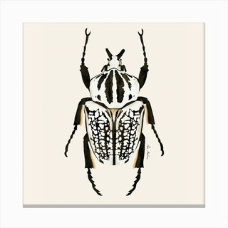 Beetle Black And White Square Canvas Print