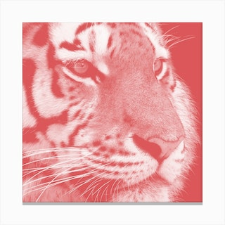 Tiger Pastel Red Square Canvas Print